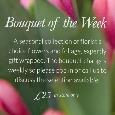 Bouquet of the Week. A seasonal collection of florist's choice flowers and foliage, expertly gift wrapped. The bouquet changes weekly so please pop in or call us to discuss the selection available. £25. Available in-store only